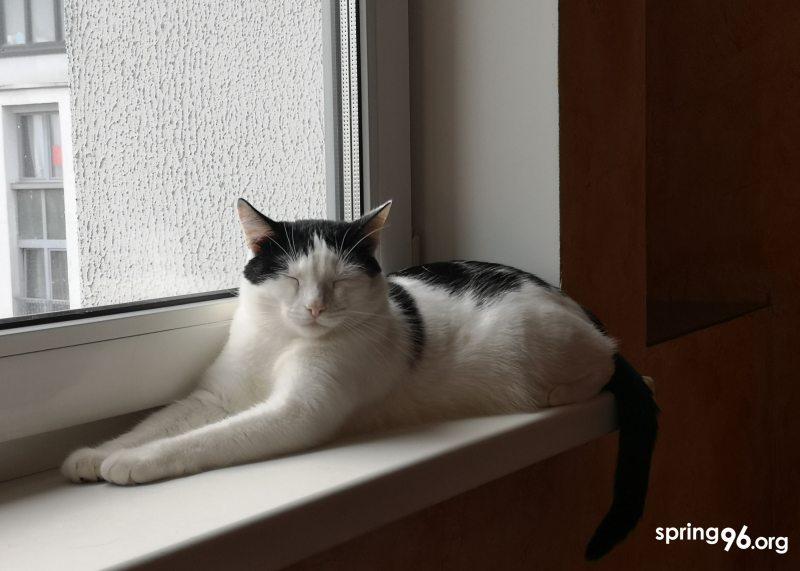 Один из котов Марфы по кличке Морфей. Его Марфа подобрала на улице